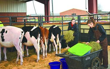 Torrie Reed (left) and Octavia Bushey make sure the cows stay fed and the area stays clean while waiting for participants to finish grooming before the show begins.