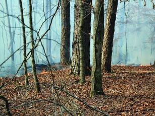 Low humidity and high winds contributed to a brush fire spreading in Coosawattee River Resort last week.