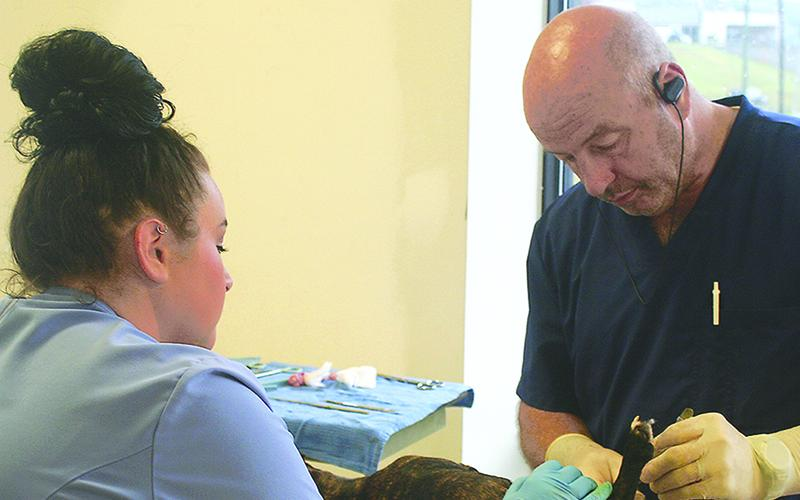 Dr. Craig Chester, right, is assisted by vet tech Emerald Goble during a discount spay-neuter clinic sponsored by Friends of Gilmer Animal Shelter (FOGAS) last November.